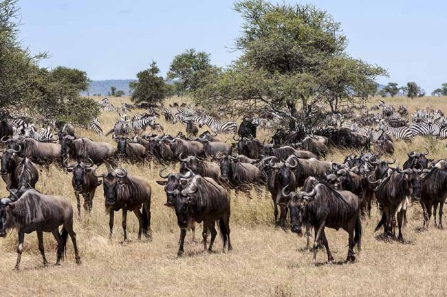 great migration 3